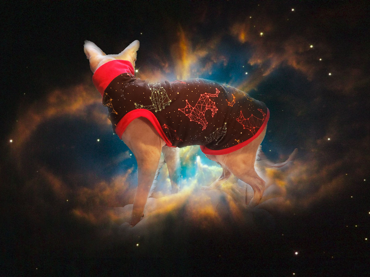 constellationhakubacknebulacrop