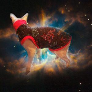 constellationhakubacknebulasquare